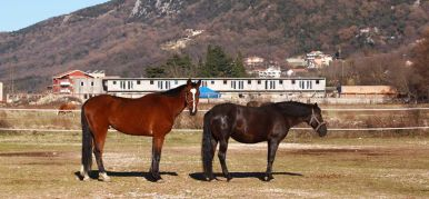 Equestrian center Budva